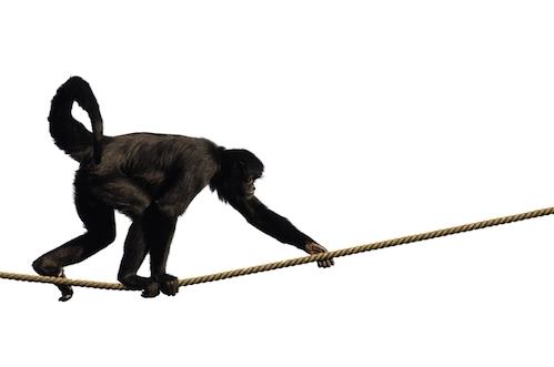 Nimble Monkey